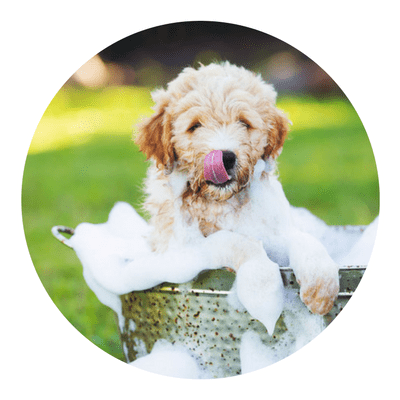 Paw-Lofts-Dog-Grooming-Dallas-min