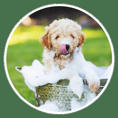 Paw-Lofts-Dog-Grooming-Dallas-min