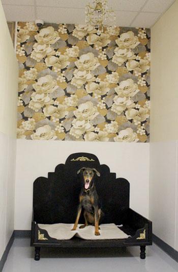 Dog Boarding Suite
