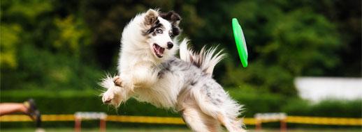 dog-boarding-activities