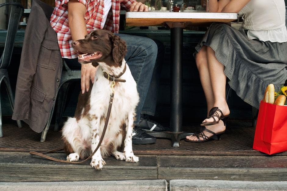 Top 8 Dog Friendly Restaurants Dallas